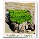 Reisefelder Korea